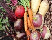 كيف تخزن الخضروات الجذرية في المطبخ؟