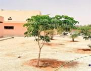 كيف تطلب شجرة لزراعتها أمام منزلك أو منشأتك التجارية مجاناً؟