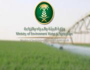 «البيئة» توضح أسباب وقف زراعة الأعلاف الخضراء.. وموعد تطبيق القرار