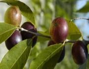 فاكهة مثالية لحرق الدهون وتخفيض الوزن!