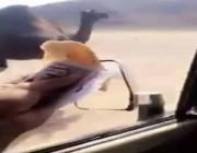 فيديو صادم.. شاب يطعم ناقة نقودًا!
