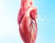 النمر: 6 عوامل تسبب انسداد شرايين القلب احذروها