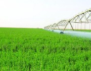 بعد تطبيق قرار إيقاف زراعة الأعلاف.. تعرف على آلية ضبط المخالفات والعقوبات المقررة