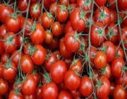 «البيئة» توضح علاقة المبيدات بتغير لون الطماطم