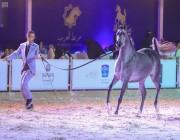 اختتام بطولة العرب لجمال الخيل بالرياض بتفاعل جماهيري كبير