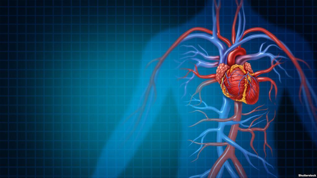 دراسة: شاهد شرايينك لتهتم بصحتك