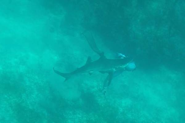 فيديو .. سمكة قرش طولها متران تقضم رأس صياد